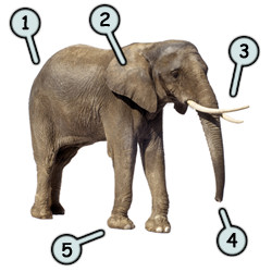 How to draw cartoon elephants step 1