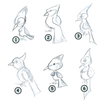 How to draw a bird. The blue jay example step 4