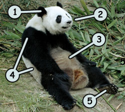 How to draw a panda step 1