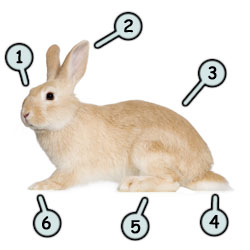 How to draw a rabbit step 1