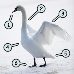 How to draw a swan step 1
