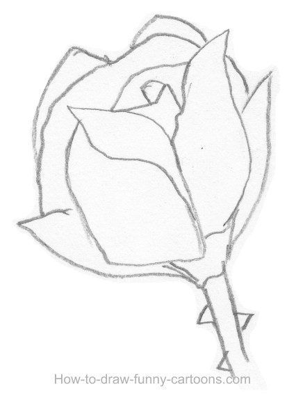 Drawing Lines Is Hard : Sketches of roses