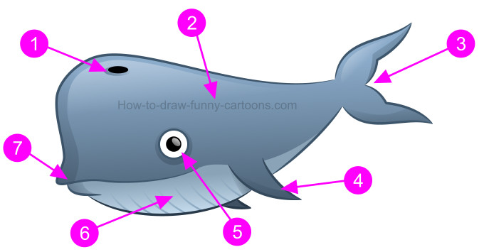 How to draw the biggest whale possible!
