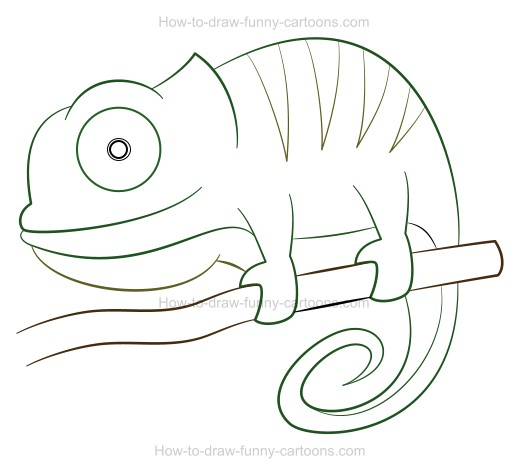 Chameleon Cartoon Outline How To Draw A