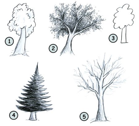 I often draw some simple trees like this one 3 in my drawings depending on what you really want to achieve this tree looks good 2 but requires more