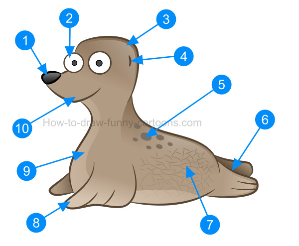 How to draw a cute baby seal