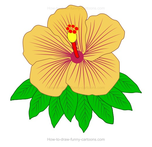 How To Create A Hibiscus Drawing