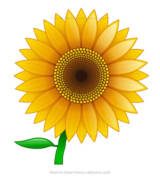 Gallery For gt Simple Sunflower Drawings
