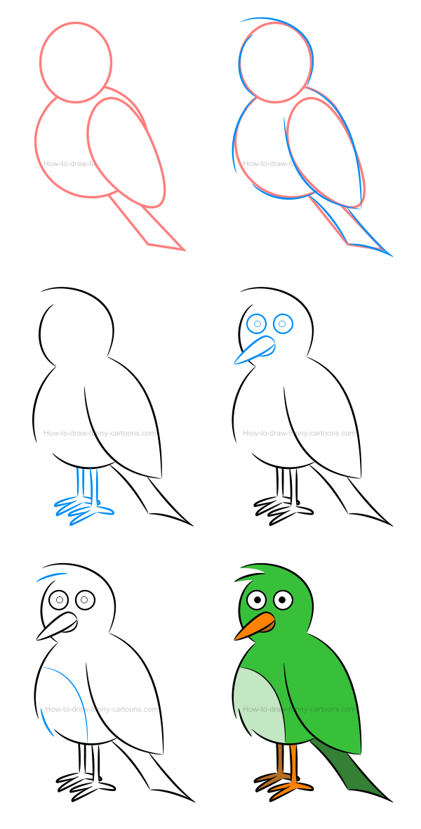 How to draw an illustration of a bird