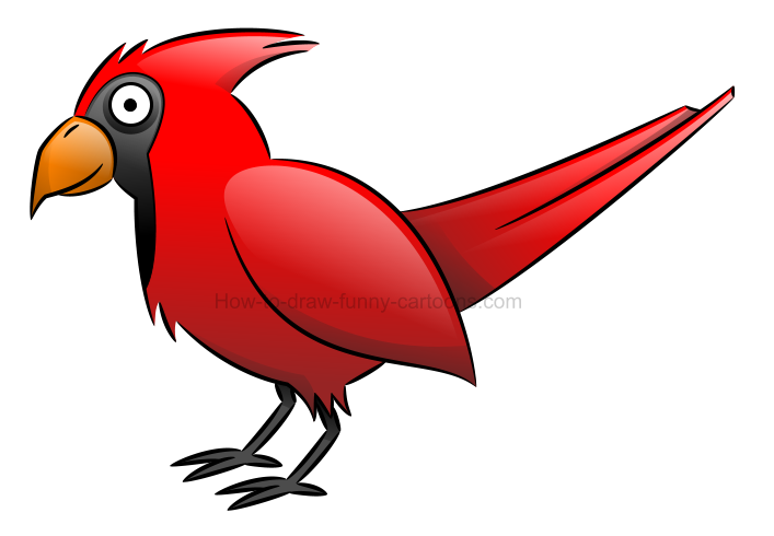 How to draw an illustration of a cardinal