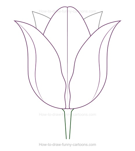 Line Drawing Tulip : Creating a tulip drawing