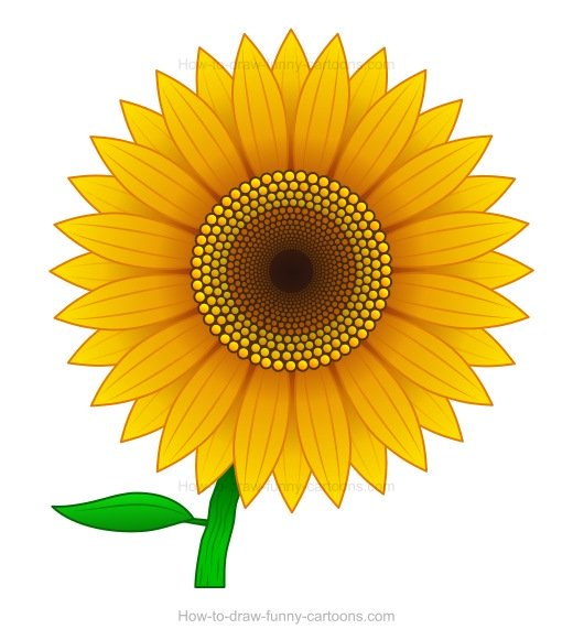 How to Draw A Sunflower