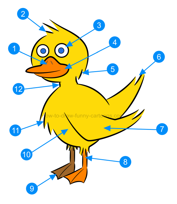 How to draw an illustration of a duck
