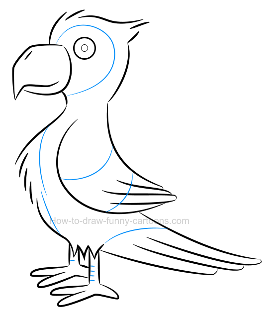 How to draw an illustration of a parrot