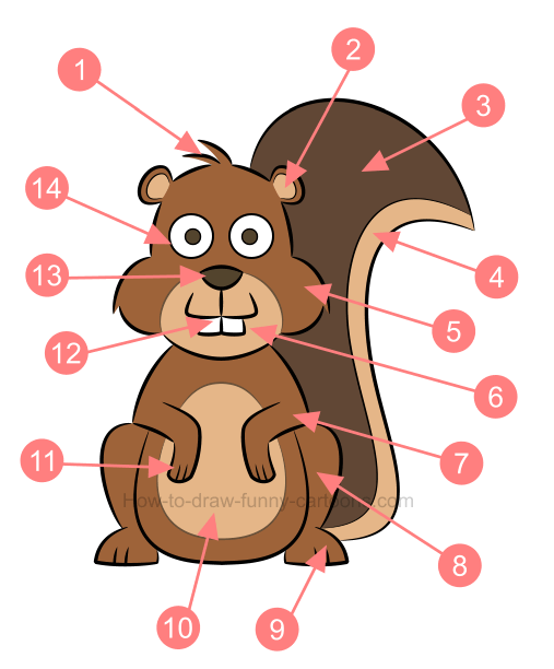 How to draw an illustration of a squirrel